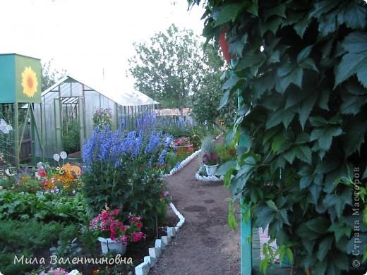 У меня в саду фото 6