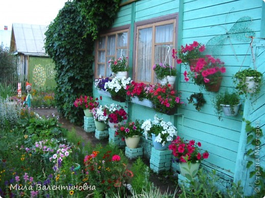 У меня в саду фото 1