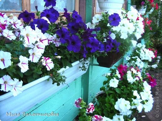 У меня в саду фото 4