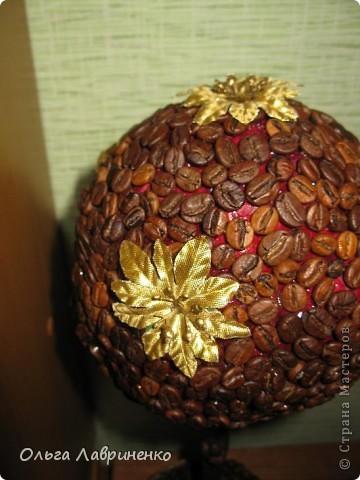 Кофейное дерево фото 4