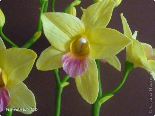 """Добрый вечер Страна!!! Вот такой цветочек , похожий на Дендробиум , заказали. Удивяют люди своими желаниями: """"Хочу что-то такое...!?"""" А, ты попробуй угодай. Ну, вроде , угодила. фото 2"""