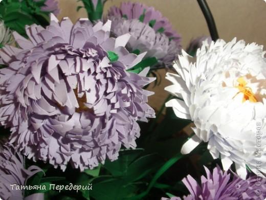 Астра - символ любви и изысканности. Сегодня - День Поцелуев. Я поздравляю всех жителей СМ с этим замечательным праздником и дарю вам эти скромные цветы. Желаю взаимной любви и только сладких поцелуев!!! фото 5