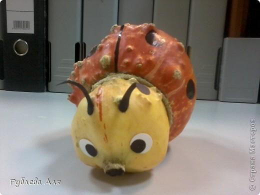 Попросила у коллеги семена декоративной тыквы. Когда он ЭТО принес, сказал, что красивые тыквы жалко пускать на семена, поэтому он отдаст эту неудачную. Короче зарезать жучка на семена рука у меня так и не поднялась... фото 2