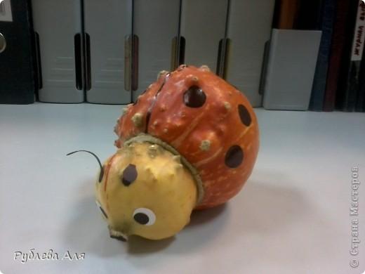 Попросила у коллеги семена декоративной тыквы. Когда он ЭТО принес, сказал, что красивые тыквы жалко пускать на семена, поэтому он отдаст эту неудачную. Короче зарезать жучка на семена рука у меня так и не поднялась... фото 1