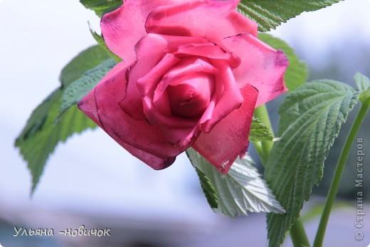 вот она, моя лепная красавица))) самой понравилась.. но почему-то лепятся у меня садовые розы все время. ну да ладно, поехали мы в гости к родственнице, а из племянников - у меня только одна девочка, вот и решила ей подарить украшалочку, тем более, она в таком возрасте (13 лет), когда их носить-не переносить))правда украшалочка до племянницы так и не дошла, моя сестра( её мама себе розочку забрала)))) придется почтой потом племяшке высылать её вариант))) фото 1