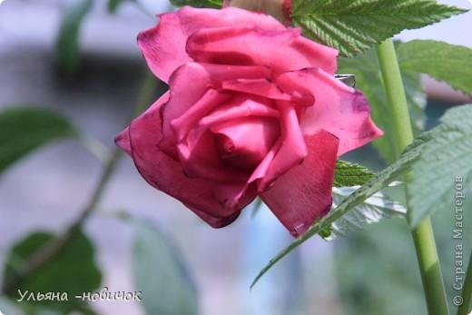 вот она, моя лепная красавица))) самой понравилась.. но почему-то лепятся у меня садовые розы все время. ну да ладно, поехали мы в гости к родственнице, а из племянников - у меня только одна девочка, вот и решила ей подарить украшалочку, тем более, она в таком возрасте (13 лет), когда их носить-не переносить))правда украшалочка до племянницы так и не дошла, моя сестра( её мама себе розочку забрала)))) придется почтой потом племяшке высылать её вариант))) фото 4