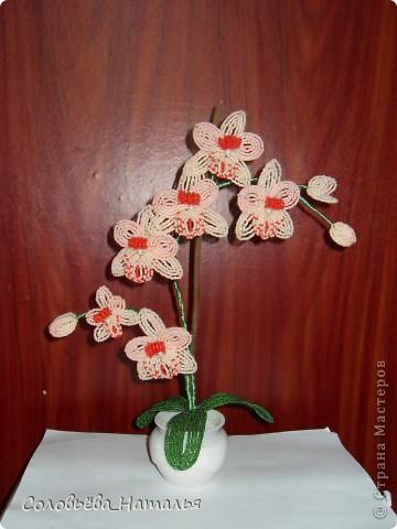 Новая орхидея фото 2