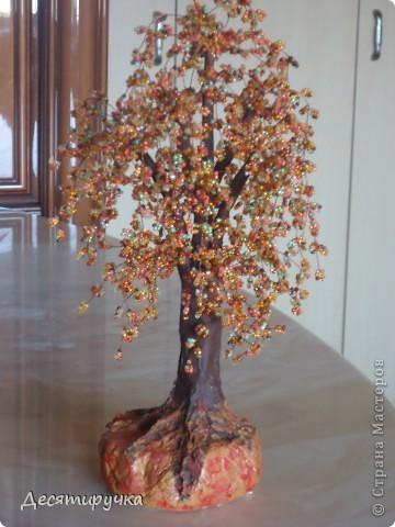 яблонька с золотыми яблоками фото 24