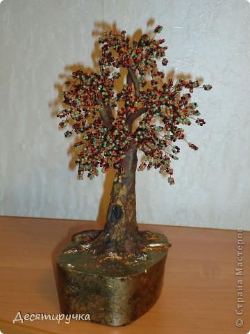 яблонька с золотыми яблоками фото 19