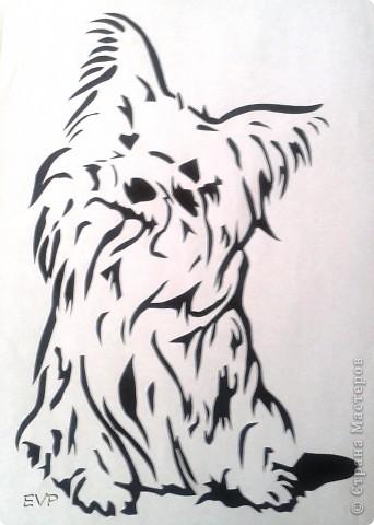 Нашла картинку такой смешной собачки, просто копия нашего домашнего любимца - Кузьмы. Вот, что у меня получилось. фото 1