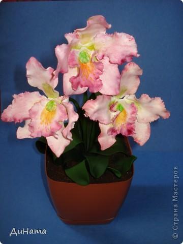 орхидея каттлея фото 3