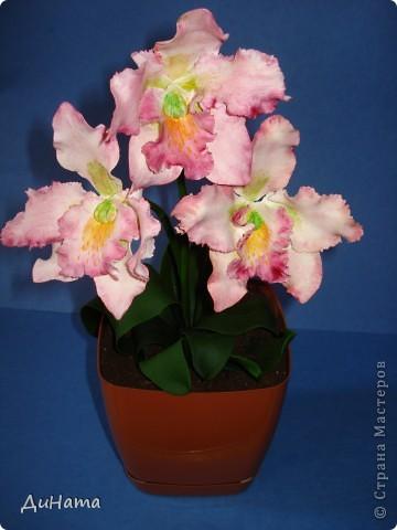 орхидея каттлея фото 1