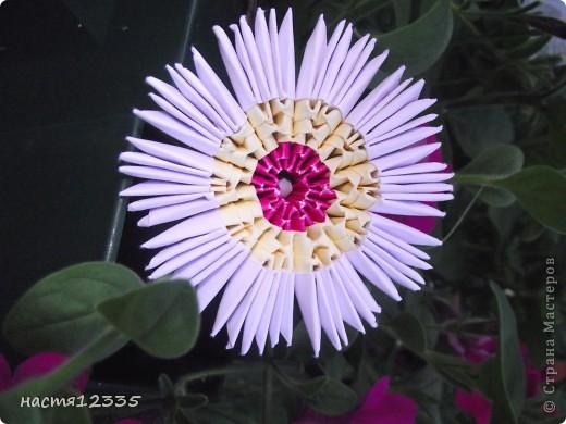 мой первый цветок!!! фото 2