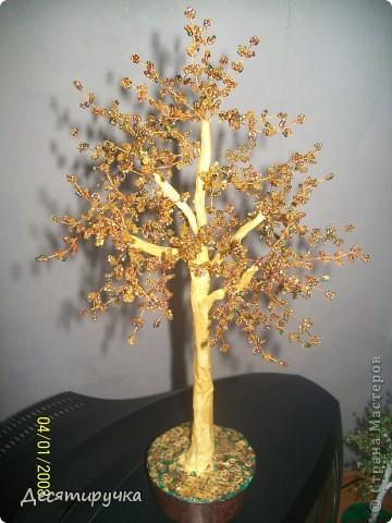 яблонька с золотыми яблоками фото 10