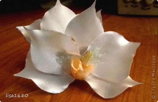 Вот такая получилась белая орхидея крабик фото 1