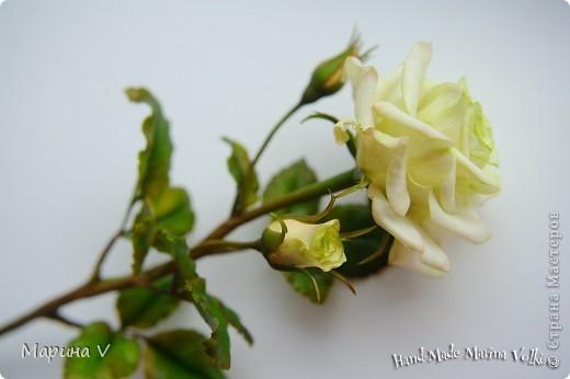 Посчастливилось мне попасть на урок к замечательному мастеру (кстати, ее гениальные розы можно посмотреть и в Стране). Так вот результат того мк я покажу позже, а это уже полностью моя самостоятельная работа))) фото 1