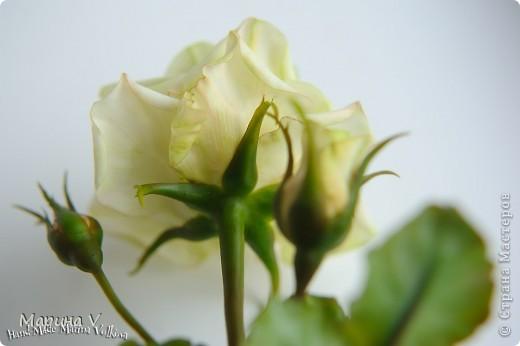 Посчастливилось мне попасть на урок к замечательному мастеру (кстати, ее гениальные розы можно посмотреть и в Стране). Так вот результат того мк я покажу позже, а это уже полностью моя самостоятельная работа))) фото 2