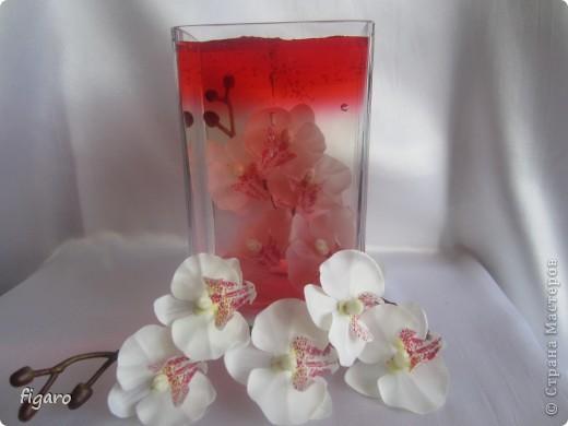 Орхидея мания. фото 1