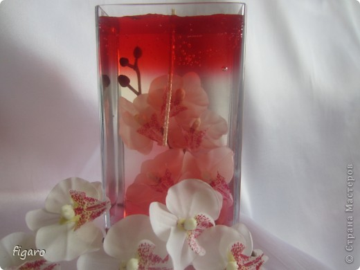 Орхидея мания. фото 3