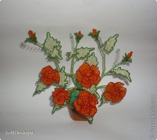 Миниатюрный кустик роз. фото 1