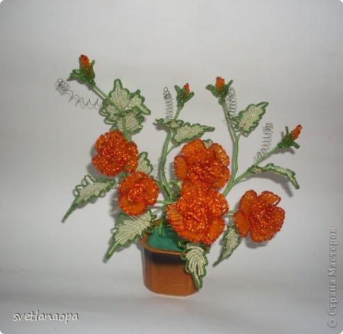Миниатюрный кустик роз. фото 2
