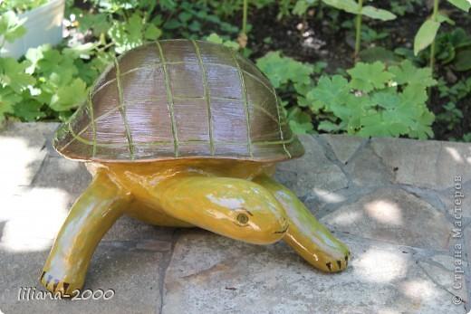 Черепаха фото 4