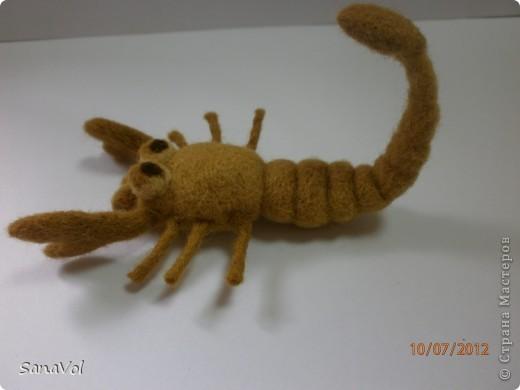 Вы хотели бы иметь своего домашнего скорпиона с хорошим характером? А у нас он уже есть!                фото 3
