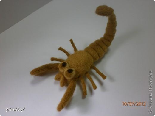 Вы хотели бы иметь своего домашнего скорпиона с хорошим характером? А у нас он уже есть!                фото 1