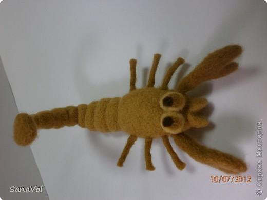 Вы хотели бы иметь своего домашнего скорпиона с хорошим характером? А у нас он уже есть!                фото 4