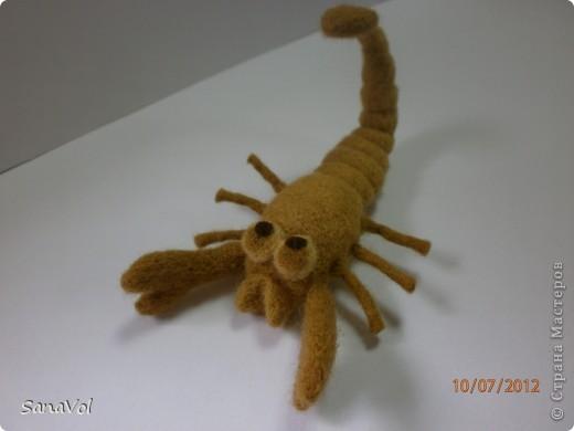 Вы хотели бы иметь своего домашнего скорпиона с хорошим характером? А у нас он уже есть!                фото 2