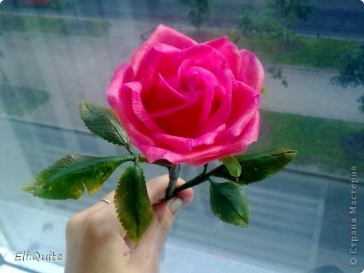 Сегодня я вдруг осознала, что леплю уже наверно 20-ю розу, но ни разу их здесь не показывала! Вот исправляюсь! ;) Представляю на Ваш суд 2 свои последние работы: розу и орхидею. Роза слеплена в подарок для подруги моей бабушки, а орхидея - одному замечательному врачу! фото 3
