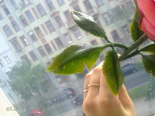 Сегодня я вдруг осознала, что леплю уже наверно 20-ю розу, но ни разу их здесь не показывала! Вот исправляюсь! ;) Представляю на Ваш суд 2 свои последние работы: розу и орхидею. Роза слеплена в подарок для подруги моей бабушки, а орхидея - одному замечательному врачу! фото 4