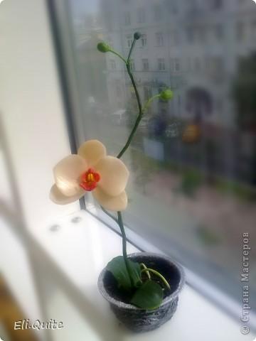 Сегодня я вдруг осознала, что леплю уже наверно 20-ю розу, но ни разу их здесь не показывала! Вот исправляюсь! ;) Представляю на Ваш суд 2 свои последние работы: розу и орхидею. Роза слеплена в подарок для подруги моей бабушки, а орхидея - одному замечательному врачу! фото 7