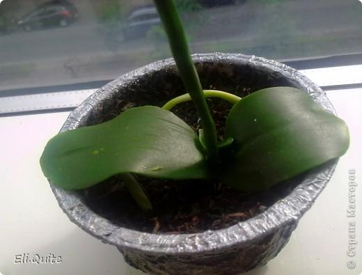 Сегодня я вдруг осознала, что леплю уже наверно 20-ю розу, но ни разу их здесь не показывала! Вот исправляюсь! ;) Представляю на Ваш суд 2 свои последние работы: розу и орхидею. Роза слеплена в подарок для подруги моей бабушки, а орхидея - одному замечательному врачу! фото 10