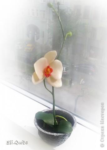 Сегодня я вдруг осознала, что леплю уже наверно 20-ю розу, но ни разу их здесь не показывала! Вот исправляюсь! ;) Представляю на Ваш суд 2 свои последние работы: розу и орхидею. Роза слеплена в подарок для подруги моей бабушки, а орхидея - одному замечательному врачу! фото 6