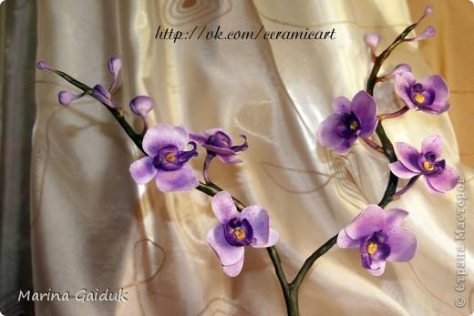 Ветка орхидеи фаленопсис фото 5