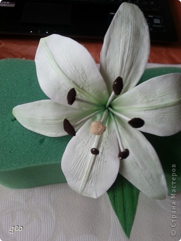 Зеленая ЛИЛИЯ. фото 10