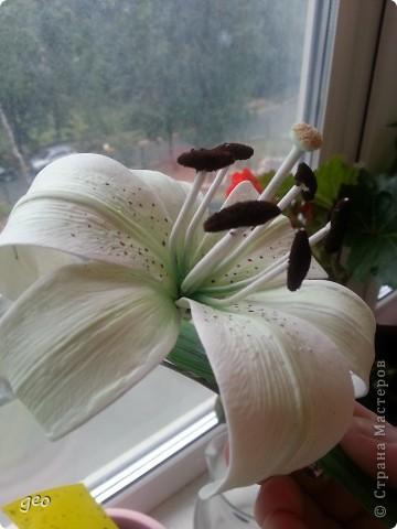 Зеленая ЛИЛИЯ. фото 12