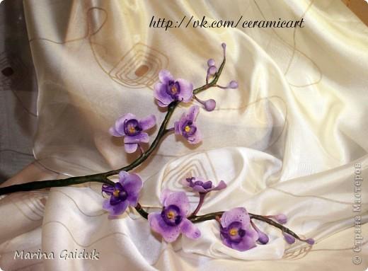 Ветка орхидеи фаленопсис фото 2
