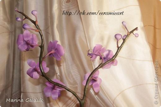Ветка орхидеи фаленопсис фото 3