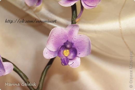 Ветка орхидеи фаленопсис фото 4