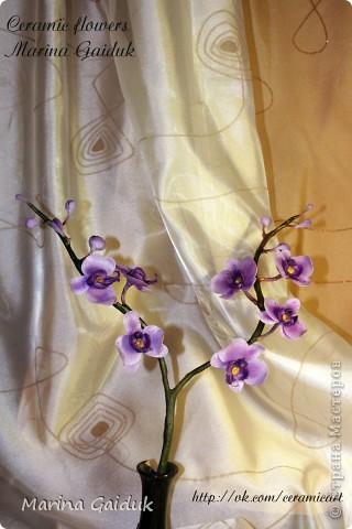 Ветка орхидеи фаленопсис фото 1