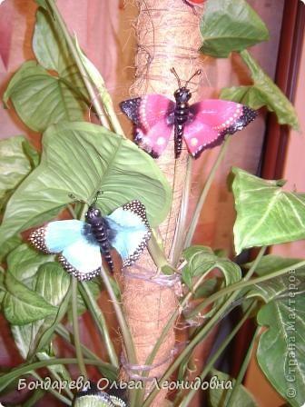 Приветствую всех мастериц. Спасибо, что заглянули в гости. Я снова к Вам с бабочками. Меня так понесло, так затянуло на создание такой красоты природы, что  не могу остановиться. Решила приукрасить своё любое растение. Пусть теперь бабочки живут и в моём доме. фото 6