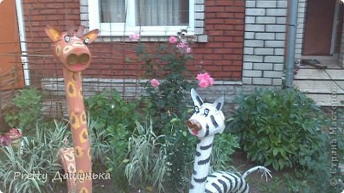 Жираф и зебра фото 1