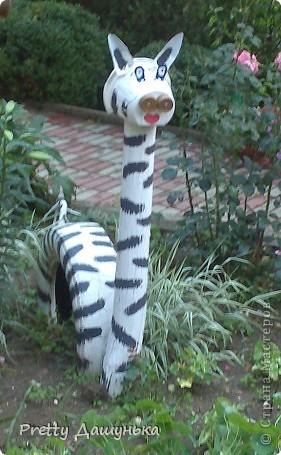 Жираф и зебра фото 2