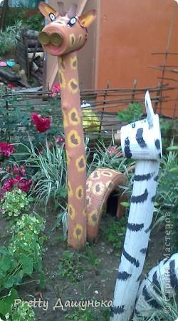 Жираф и зебра фото 3