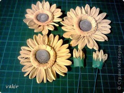 Всем доброго времени суток! Сегодня у меня расцвели подсолнухи! Давно уже облизывалась, любуясь подсолнухами мастериц! Наконец, вырастила и свои в подарок родственнице, замечательному светлоу человеку, которая тоже очень любит эти солнечные цветы. Сразу же приношу извинения за некоторые не очень качественные фото, выполненные с помощью мобильного, на них искажены цвета. фото 10
