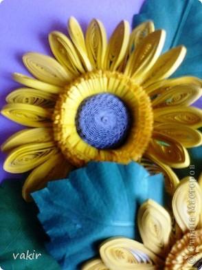 Всем доброго времени суток! Сегодня у меня расцвели подсолнухи! Давно уже облизывалась, любуясь подсолнухами мастериц! Наконец, вырастила и свои в подарок родственнице, замечательному светлоу человеку, которая тоже очень любит эти солнечные цветы. Сразу же приношу извинения за некоторые не очень качественные фото, выполненные с помощью мобильного, на них искажены цвета. фото 5