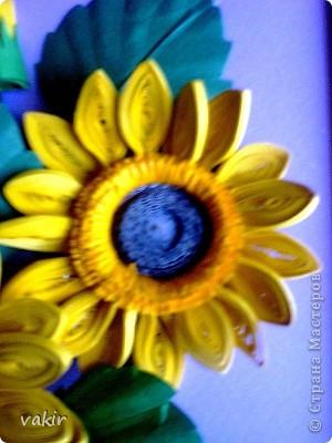 Всем доброго времени суток! Сегодня у меня расцвели подсолнухи! Давно уже облизывалась, любуясь подсолнухами мастериц! Наконец, вырастила и свои в подарок родственнице, замечательному светлоу человеку, которая тоже очень любит эти солнечные цветы. Сразу же приношу извинения за некоторые не очень качественные фото, выполненные с помощью мобильного, на них искажены цвета. фото 6
