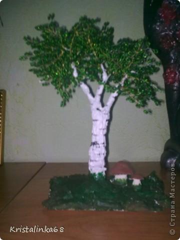 Яблоня и березки фото 3